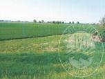 Immagine di Terreni agricoli di forma irregolare con fabbricato in Polesine Parmense (PR)