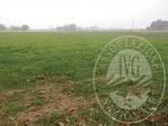 Immagine di Terreni agricoli contigui in Rubiera (RE)